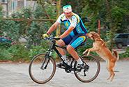Как защититься от собак